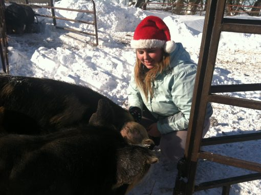 girl in santa hat with heritage pigs in the snow